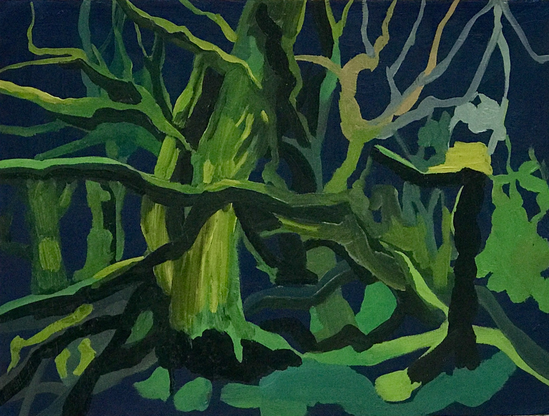 The forest at midnight