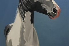 A Horse of Many Colors